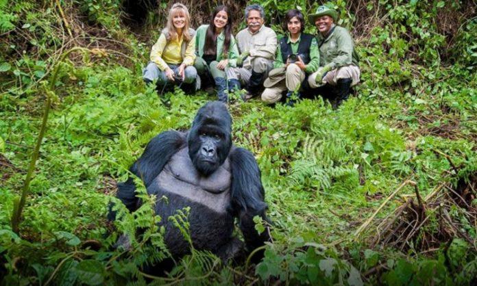 Gorilla Trekking in Easy